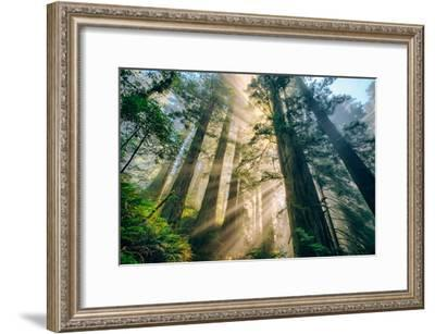 Divine Forest Light Coast Redwoods Del Norte California-Vincent James-Framed Photographic Print