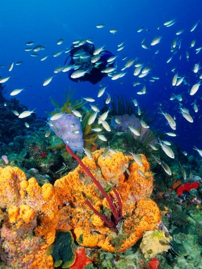 Diving at Barry's Dream Site, Near Mero, Mero, Dominica-Michael Lawrence-Photographic Print