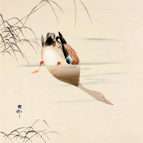 Diving Mallard-Koson Ohara-Giclee Print