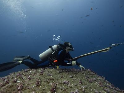 Diving With Spear Gun, Wolf Island, Galapagos Islands, Ecuador-Pete Oxford-Photographic Print