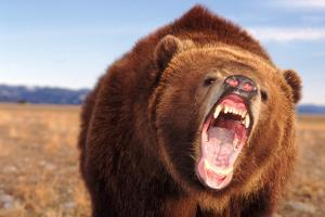 Angry Grizzly Bear by DLILLC