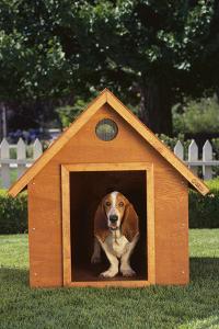 Beagle by DLILLC