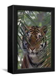 Bengal Tiger behind Palm Fronds by DLILLC
