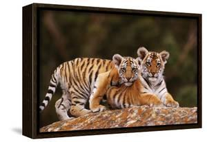 Bengal Tiger Cubs Posing on Rock by DLILLC