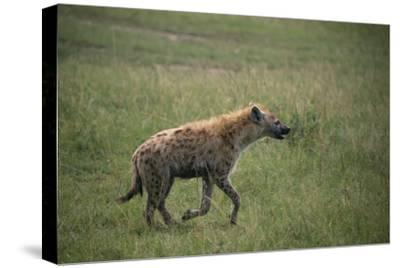 Brown Hyena Running in Grass