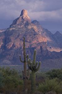 Cactus and Picacho Peak by DLILLC