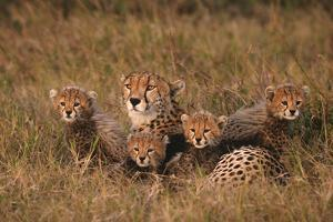 Cheetah Mother and Cubs by DLILLC