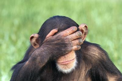 Chimpanzee Covering Eyes with Hand