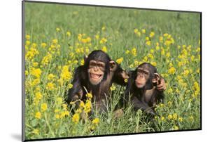 Chimpanzees by DLILLC
