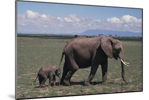 Elephant Adult and Baby by DLILLC