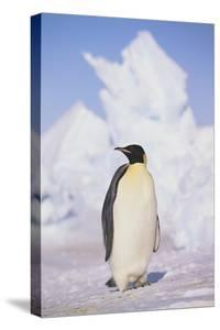 Emperor Penguin by DLILLC