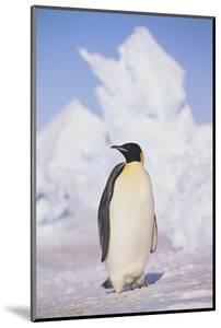 Emperor Penguin by DLILLC