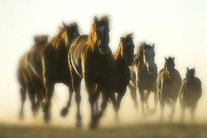 Galloping Horses by DLILLC