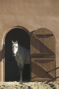 Horse in Adobe Barn by DLILLC