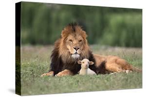 Lion Sitting down with Lamb by DLILLC