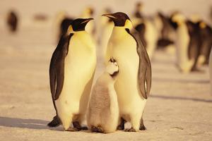 Penguin Family by DLILLC