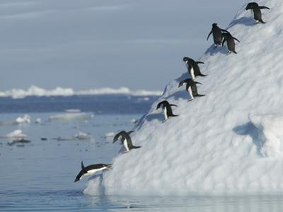Penguins Jumping into Ocean by DLILLC