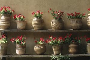 Petunias in Pots by DLILLC