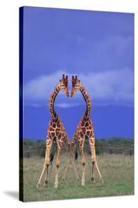 Symmetrical Giraffes by DLILLC