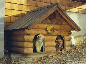 Two Dogs in a Dog House by DLILLC