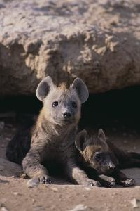 Young Spotted Hyenas by DLILLC
