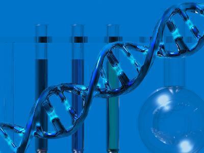DNA Molecular Model Showing Weak Hydrogen Bond Between the Bases-Carol & Mike Werner-Photographic Print