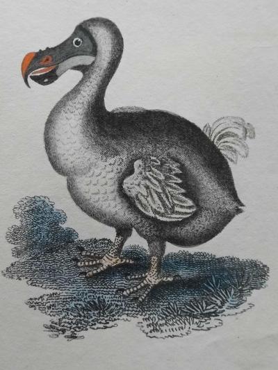 Dodo--Giclee Print