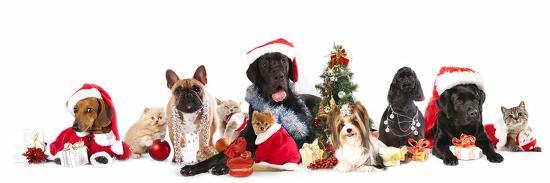 Dog and  Cat and Kitens  Wearing a Santa Hat-Lilun-Photographic Print