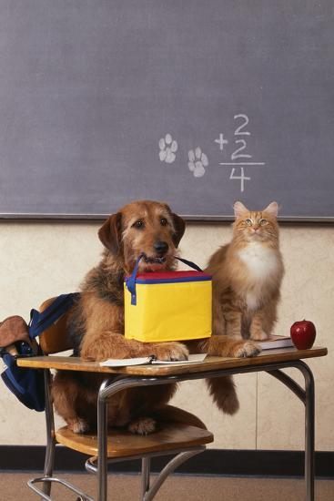 Dog and Cat at School-DLILLC-Photographic Print
