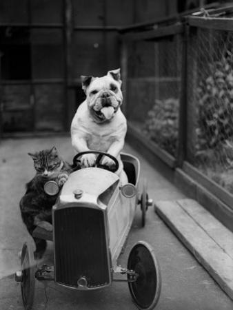 Dog and Cat Car