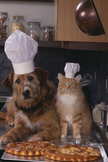 Dog and Cat Making Pizza-DLILLC-Photographic Print