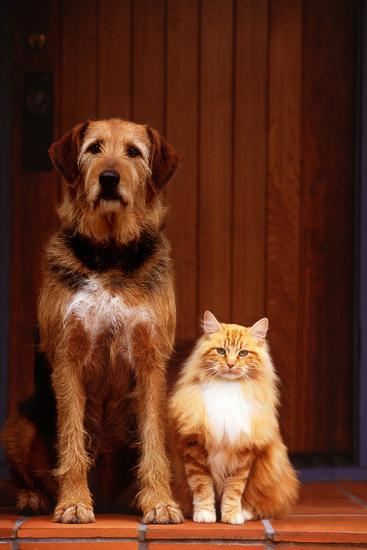 Dog and Cat on Front Porch-DLILLC-Photographic Print