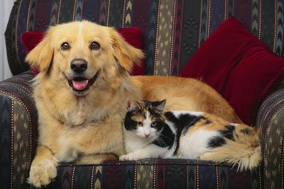 Dog and Cat Sitting in a Chair-DLILLC-Photographic Print