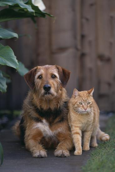 Dog and Cat Sitting Side by Side-DLILLC-Photographic Print