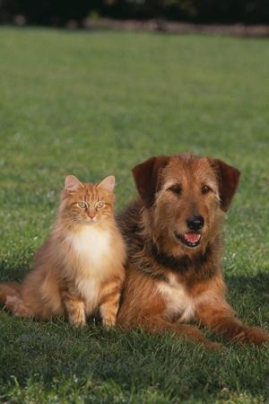 https://imgc.artprintimages.com/img/print/dog-and-cat-sitting-together-on-lawn_u-l-pzr87r0.jpg?p=0