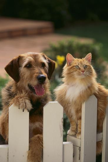 Dog and Cat Waiting beside the Fence-DLILLC-Photographic Print