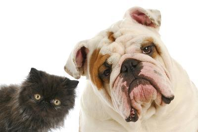 Dog And Cat-Willee Cole-Photographic Print