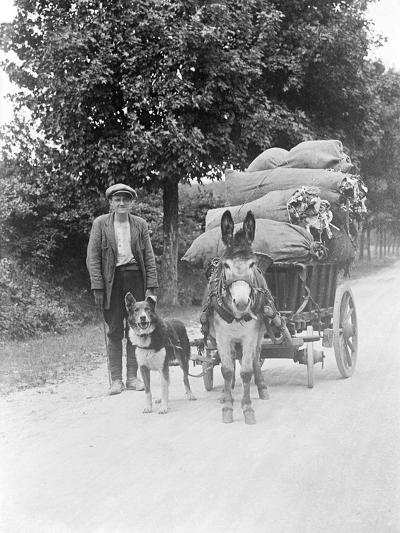 Dog and Donkey Team--Photographic Print