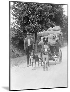 Dog and Donkey Team