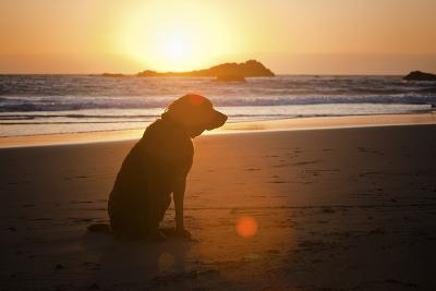 Dog at Beach-Christopher Kimmel-Photographic Print