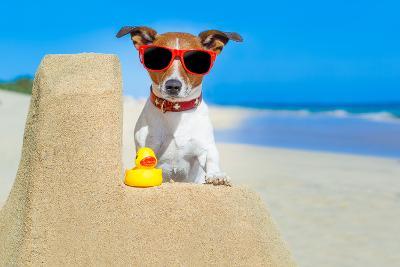 Dog at the Beach-Javier Brosch-Photographic Print