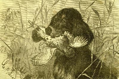 Dog Bird Hunt 1891, Austria--Giclee Print