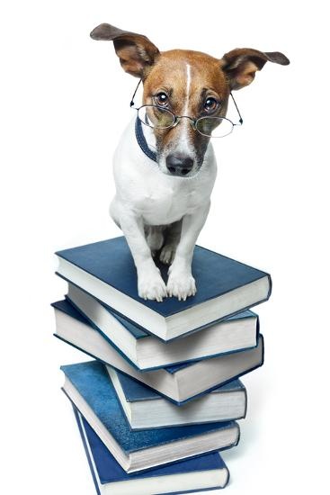 Dog Book Stack-Javier Brosch-Photographic Print