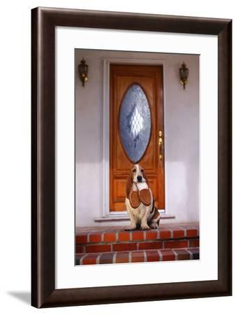 Dog Carrying Slippers in Mouth-DLILLC-Framed Photographic Print