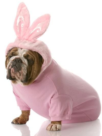 Dog Dressed Up as Easter Bunny-Willee Cole-Photographic Print