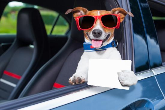 Dog Drivers License-Javier Brosch-Photographic Print