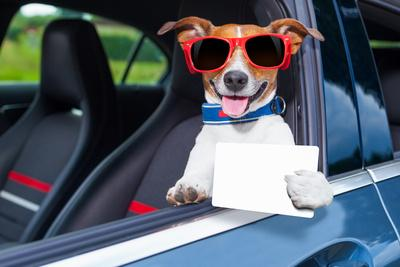 https://imgc.artprintimages.com/img/print/dog-drivers-license_u-l-q1056g00.jpg?p=0