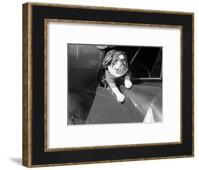 Dog Flying in Aircraft-Bettmann-Framed Photographic Print