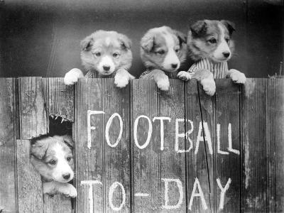 Dog Football Fans--Photographic Print
