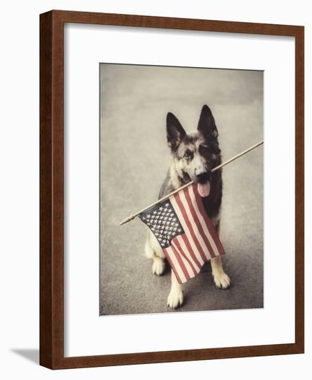 Dog Holding American Flag in Mouth-Robert Llewellyn-Framed Photographic Print